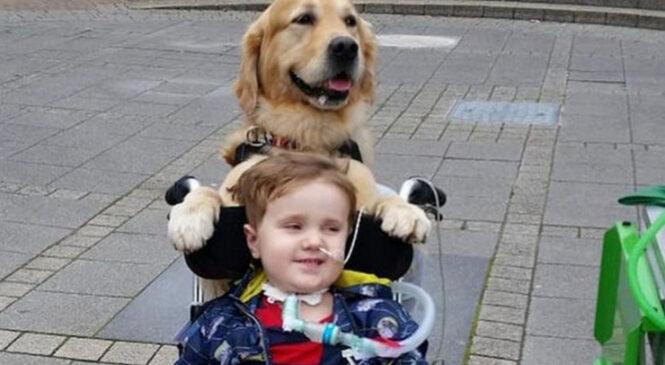 Этот пес сделал для умирающего ребенка то, что не могли врачи